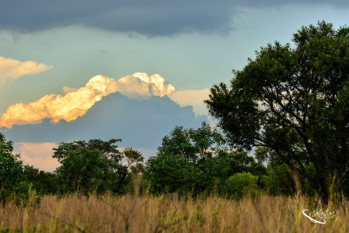 Cloud at sunset in the Bushveld