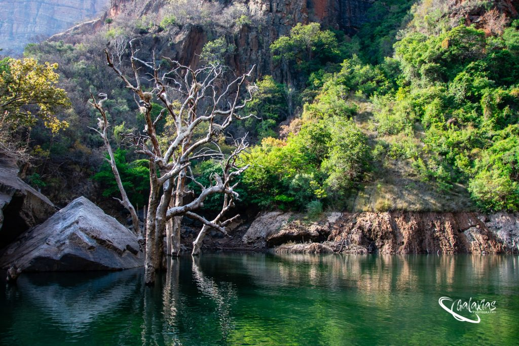 Nest tree at Kadishi Tufa waterfall