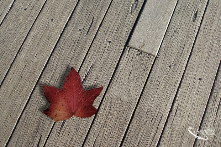 Maple tree leave on a wooden deck in autumn
